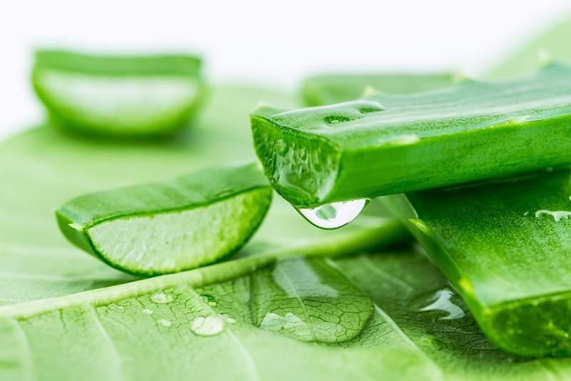 Lô hội giúp giảm sưng và đau răng vô cùng hiệu quả.
